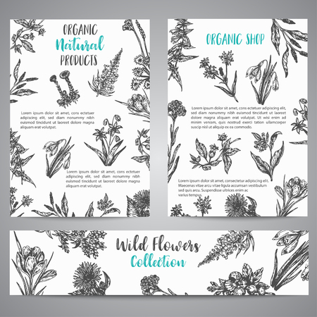 Hand drawn herbs and wild flowers brochure Vintage collection of Plants Vector illustrations in sketch style