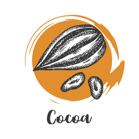 Cocoa bean drawn sketch. Chocolate design. Chocolate beans. Vintage vector illustration Ilustrace
