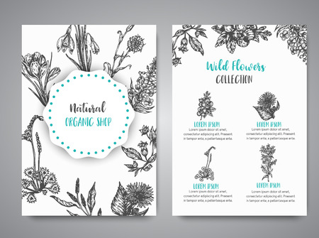 Hand drawn herbs and wild flowers cards Vintage collection of Plants Vector illustrations