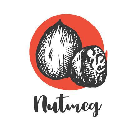Nutmeg nut seed vector. Vintage hand drawing Nutmeg butter food ingredient. Engraved hand drawn illustration in retro vintage style Vector illustration