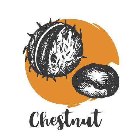 Chestnut illustration, drawing, engraving hand drawn chestnuts sketch Vector illustration