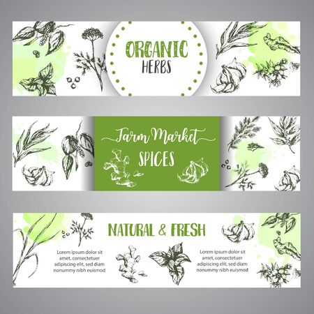Spices and herbs banners set. Sketch with hand drawn plants. Herbal vector illustration Natural organic spice poster. Dill, garlic, ginger and oregano