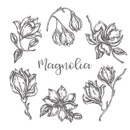 Magnolia flowers drawing Ink hand drawn set Floral sketch Vector illustation with flower isolated on white 向量圖像