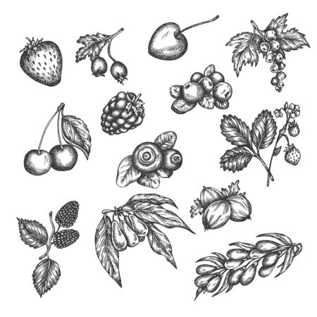Berry hand drawn vector set. Sketch of fruits Vector illustration. Berries engraving Gooseberry, raspberry, strawberry, blackberry and cherry in vintage style Design for menu, farm market poster Illustration