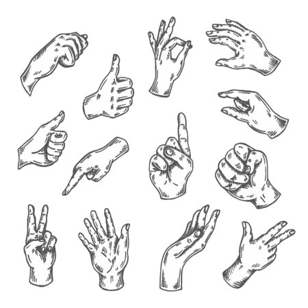 Hand gesture sketch. Vector illustration isolated on white Arm sketched. Thumb up, victory, peace doodle line set