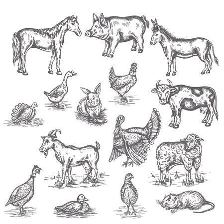 Farm animals illustration Hand drawn set vintage sketches of cow, goat, donkey and duck Isolated on white