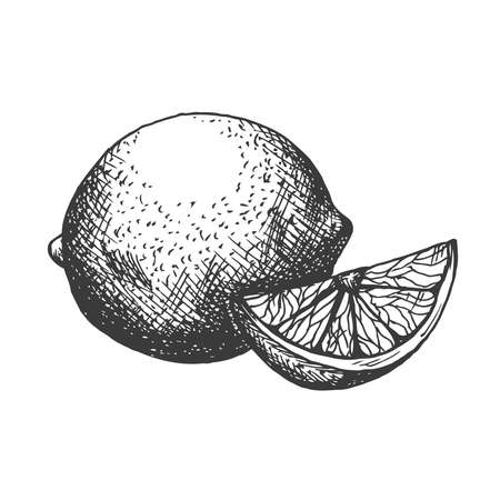 Vector hand drawn lemon illustration in retro style 向量圖像