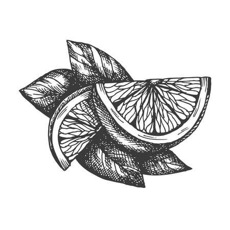 Vector hand drawn lemon illustration in retro style