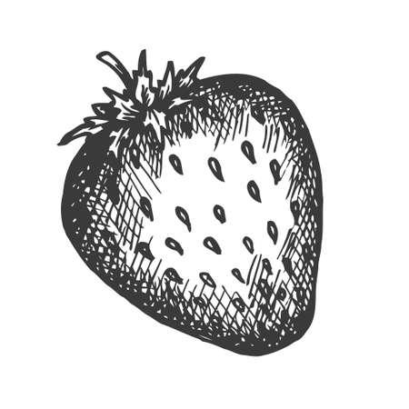 Strawberry hand drawn vector. Sketch of fruit Vector illustration. Berry in vintage style Design for menu, farm market poster Illustration