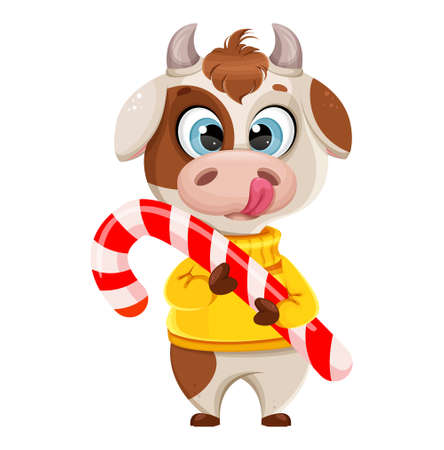 Funny bull holding big candy cane. Cute bull cartoon character in sweater, the symbol of Chinese New Year 2021. Usable for Christmas. Vector illustration