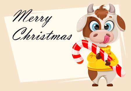 Merry Christmas greeting card with funny bull holding big candy cane. Cute bull cartoon character in sweater, the symbol of Chinese New Year 2021. Vector illustration