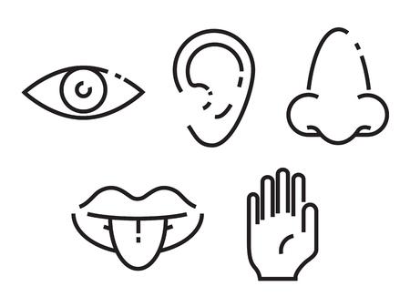 Conjunto de iconos de los cinco sentidos humanos Foto de archivo - 87521986