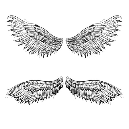 angel white: angel hand drawn wings, illustration