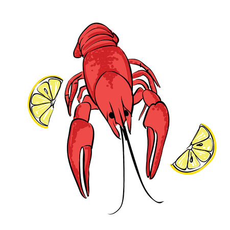 boiled: Boiled craw fish with lemon, isolated illustration