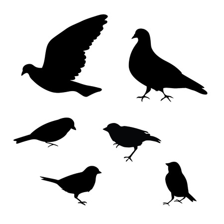 sparrows: Birds silhouette on white background, Pigeons and sparrows Illustration