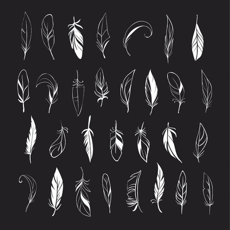 Decorative Feather set. Hand drawn illustration