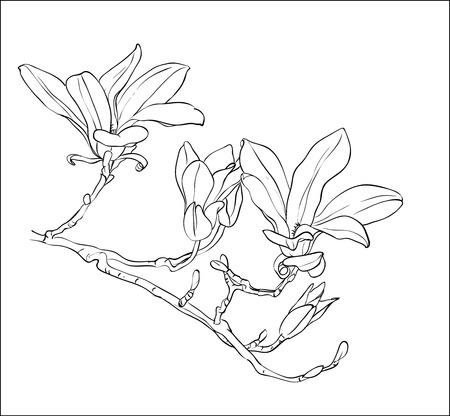 手には、モクレンの花が描かれました。手描きのリアルなスケッチ。