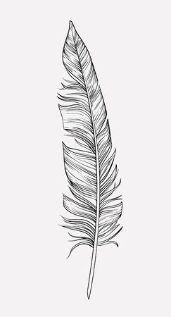 delicate: Vintage hand drawn delicate feather, vector illustration Illustration