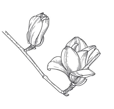 Line art flowers. Magnolia line vector illustration