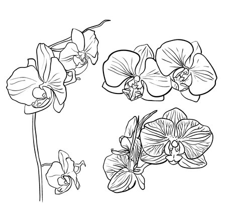 gray flower: orchid isolated on white Illustration