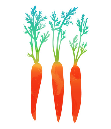 carrots isolated: Carrots isolated on white background