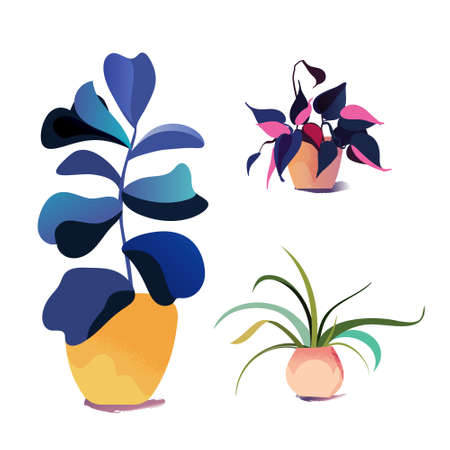 Vector potted houseplant collection. Various indoor plants.