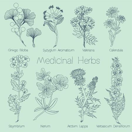 Set of Medical Herbs in vector Vetores