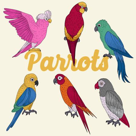 Exotic Papegaaien. Hand Drawn illustratie in vector