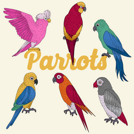 Exotic Parrots. Hand Drawn illustration in vector