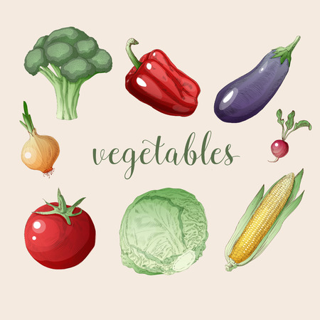 organic peppers sign: Vegetables Set in Vintage Style. Healthy Food: Broccoli, Peppers, Eggplant, Onions, Radish, Sprouts, Tomato, Corn