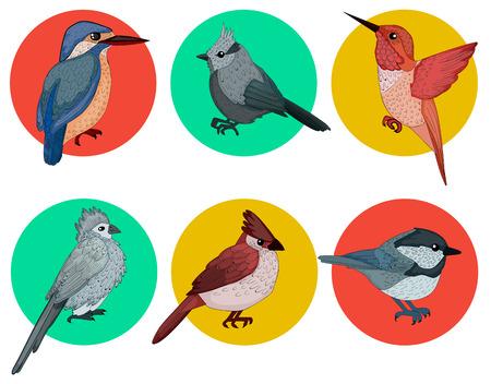 ornithological: Colorful Birds. Different Birds. Set of Birds. Hand Drawn. Vector illustration