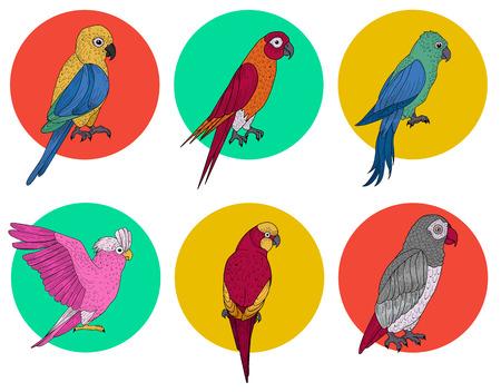 lovebird: Exotic Parrot. Tropical Bird. Various Parrots. Different Birds. Set of Birds. Hand Drawn. Vector illustration