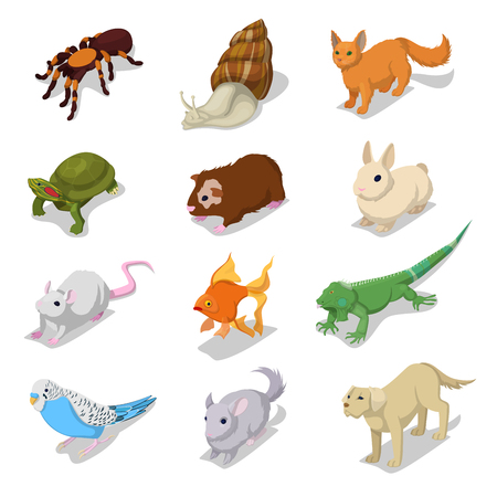 Isometric Domestic Animals Pets with Cat, Dog, Hamster and Rabbit. Vector 3d flat illustration