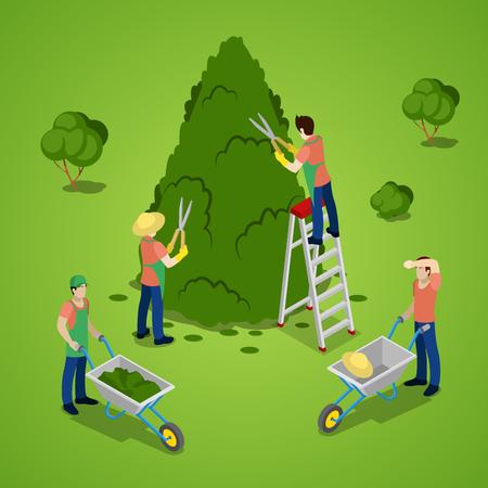 tree trimming: Miniature People Trimming Tree. Gardener Working. Isometric vector flat 3d illustration Illustration