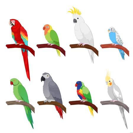 Tropische papegaaien set geïsoleerd op een witte achtergrond. Vector illustratie Stock Illustratie