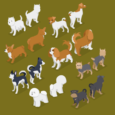 Isometric Small Dog Breeds with Jack-Russell Terrier, Corgi and West Highland Terrier. Vector flat 3d illustration