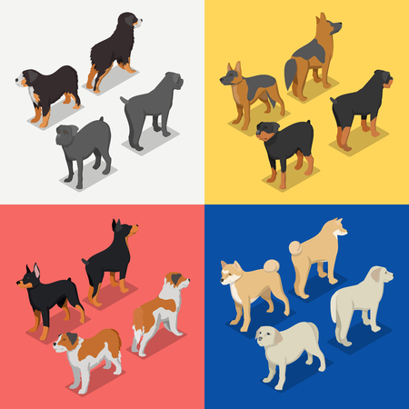 Isometric Dog Breeds with Rottweiler, Retriever and Doberman. Vector flat 3d illustration Stok Fotoğraf - 79079212