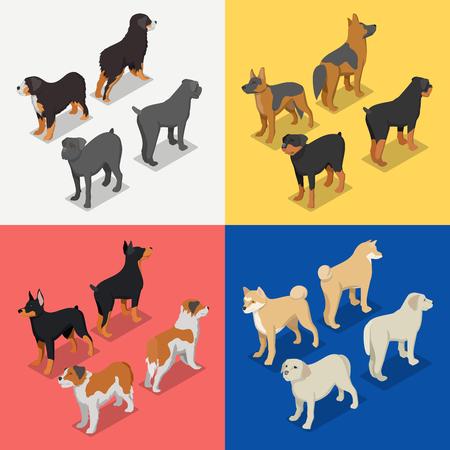 Isometrische hondenrassen met Rottweiler, Retriever en Doberman. Vector platte 3d illustratie Stock Illustratie