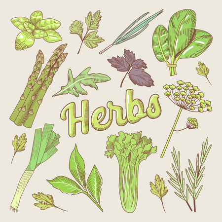 Herbs Hand Drawn Doodle. Organic Natural Food. Healthy Eating. Vector illustration