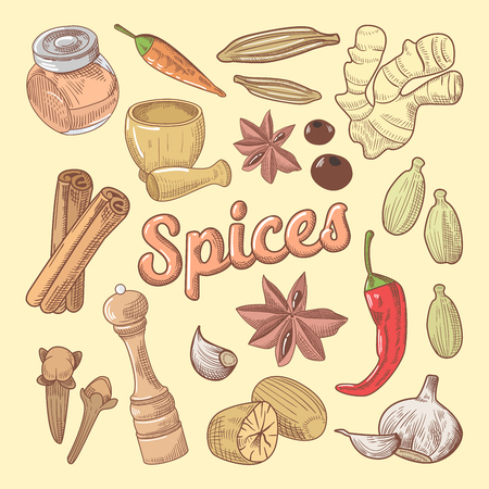 Spices Hand Drawn Doodle with Chili Pepper and Garlic. Healthy Eating Natural Food. Vector illustration