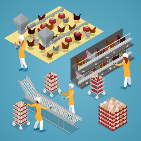 Isometric Chicken Farm Poultry. Organic Eggs Production Line. Vector flat 3d illustration