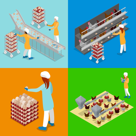 Isometric Chicken Farm Poultry. Organic Eggs Production Line. Work on Birds Plant. Vector flat 3d illustration