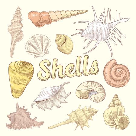 貝殻手描き水生落書き。海のシェルは、コレクションを分離しました。ベクトル図