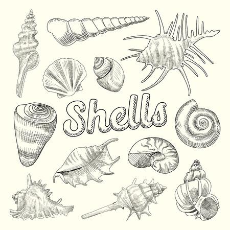 貝殻手描き水生落書き。海のシェルは、要素を分離しました。ベクトル図  イラスト・ベクター素材