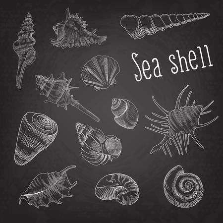 貝殻手描き水生落書き黒板。海のシェルは、要素を分離しました。ベクトル図