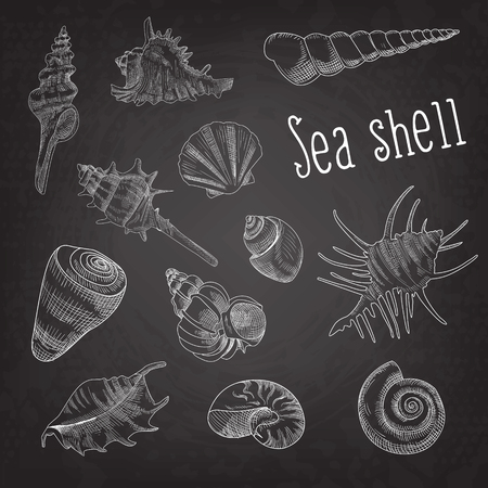 Seashells Hand Drawn Aquatic Doodle on Blackboard. Marine Sea Shell Isolated Elements. Vector illustration
