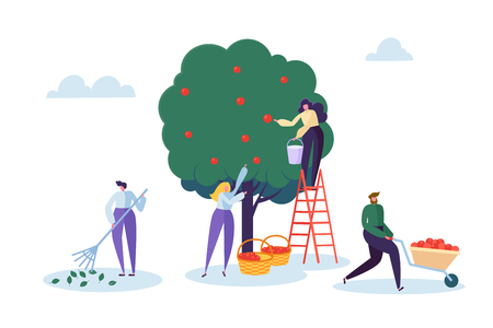 Farmer Woman Pick Apple Tree Harvest with Ladder. Character Harvesting Ripe Organic Fruit from Green Natural Tree. Country Garden Farm Landscape Flat Cartoon Vector Illustration