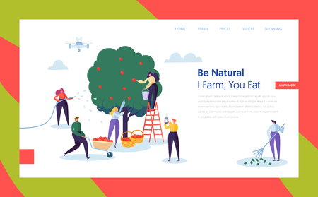 People Farmer Harvest Apple Concept Landing Page. Woman Character Harvesting Ripe Fruit to Basket. Man Control Farm with Drone Website or Web Page Flat. Cartoon Vector Illustration  イラスト・ベクター素材