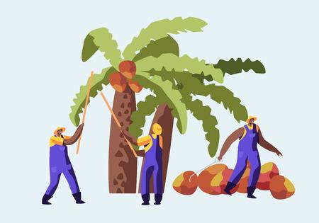 Concetto di industria di produzione di olio di palma con lavoratori che raccolgono frutta o noci di cocco dalla palma, lavoro stagionale, operai che prendono il raccolto su piantagioni africane o asiatiche, piatto del fumetto Vettoriali
