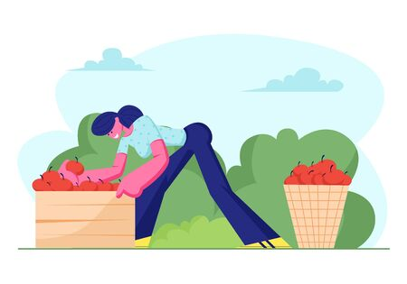 Woman Farmer Pick Apple Harvest to Basket and Box in Orchard. Gardener Character Harvesting Ripe Fruits in Garden, Ecological Healthy Farm Production. Seasonal Work. Cartoon Flat Vector Illustration